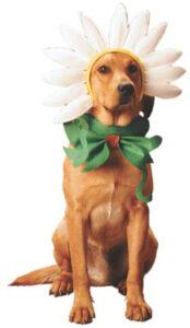 Daisy Dog 44001