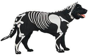 Doggie Bones